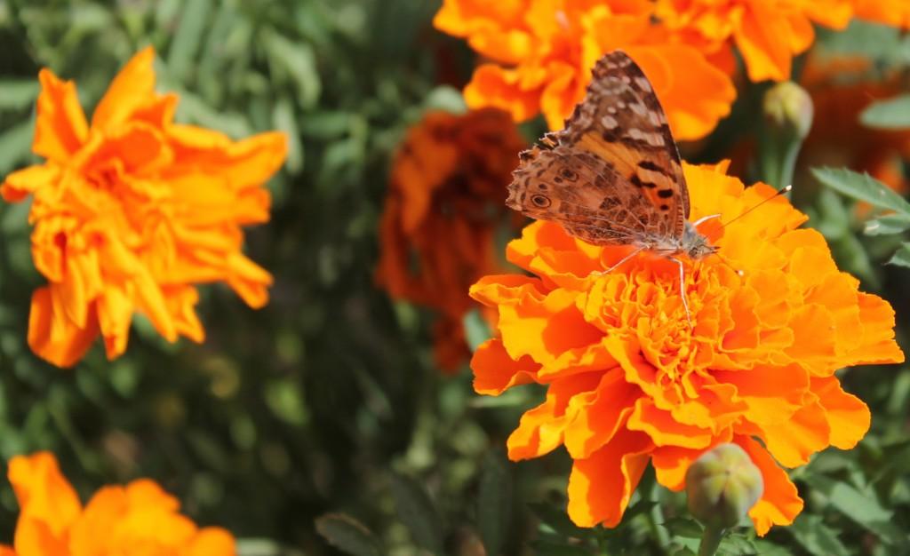 Untiring pollinator