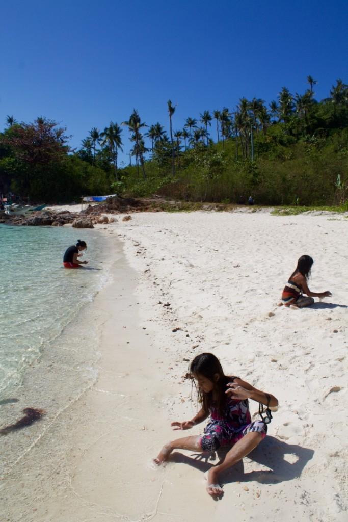 carnaza island sea shells