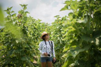 Rocapor farm in La Union