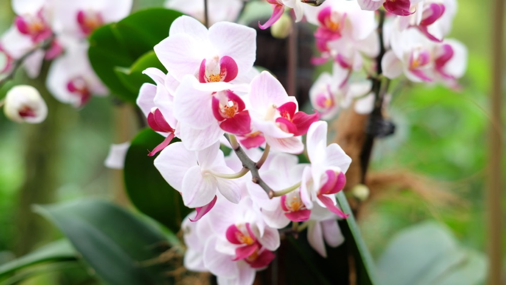 Orchids Garden in Singapore